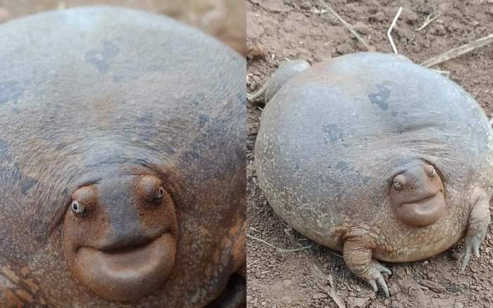 Strange frog excited netizens photo 2