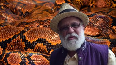 The man spent 72 hours with poisonous snakes and they never bit him