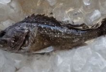 A perch with a five fold excess of radiation in the body was caught near Fukushima