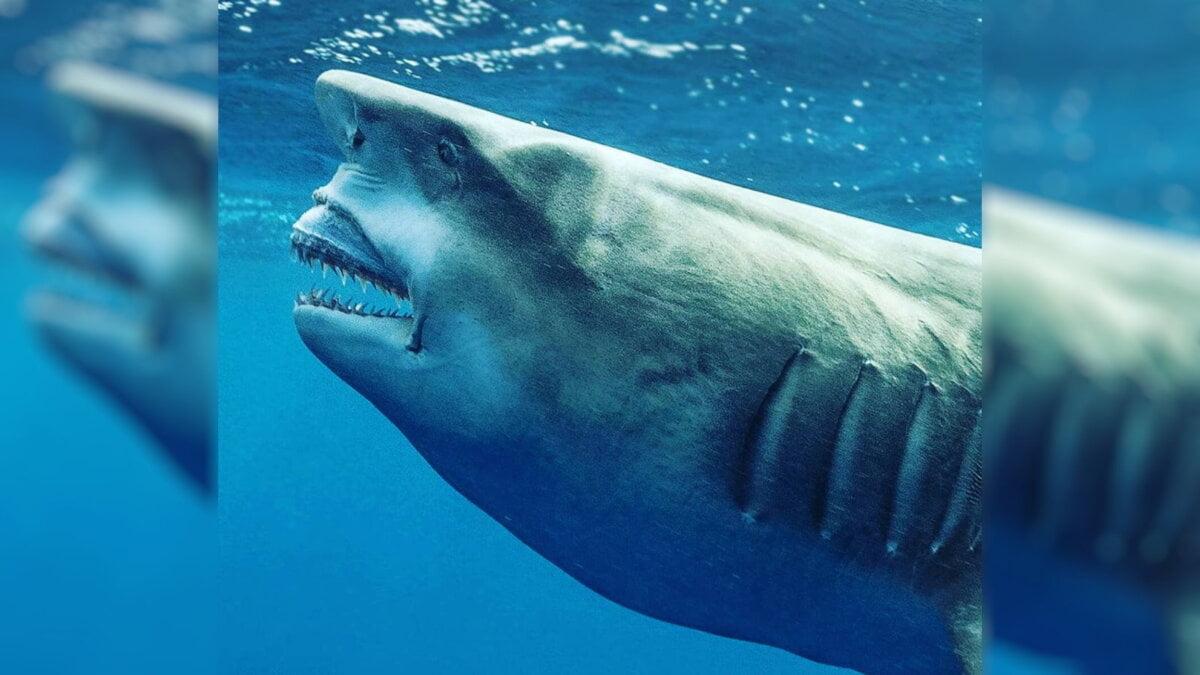 A shark similar to Donald Trump found in Florida