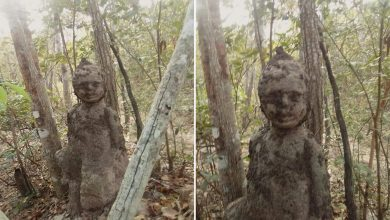 A termite mound similar to a human child was found in Thailand