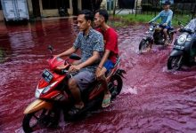 In an Indonesian village bloody rivers run through the streets