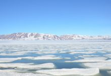 Poisonous phytoplankton will change the future of the Arctic