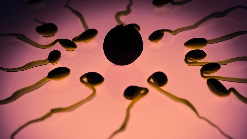 Scientists have discovered killer sperm