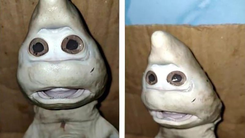 Small shark with a human face was caught off the coast of Indonesia 1