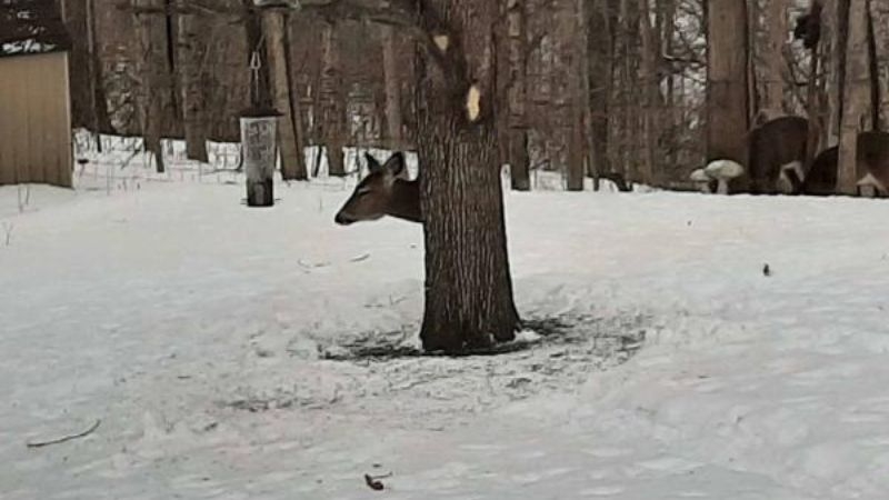 Social media users cant figure out where the deers body is in the photo