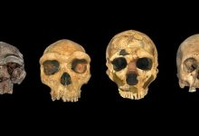 The time and place of origin of Homo sapiens remain unknown despite the efforts of scientists