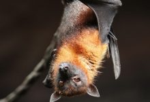 Coronavirus almost identical to COVID 19 found in bats in China