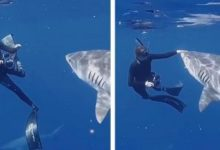 Marine biologist shows you how to fight off a shark if you bump into it face to face