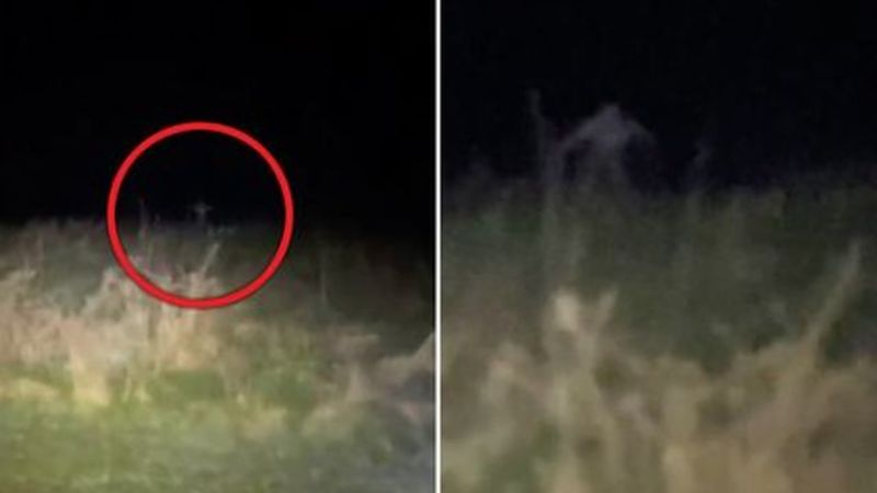 The video caught a skinny aggressive monster jumping out of the grass