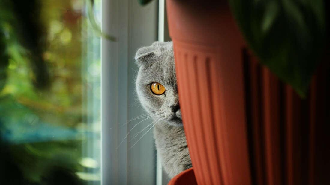 CIA created a cyborg cat to spy on the Soviet Union