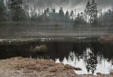 Carbon bomb forerunners of global catastrophe found in a swedish swamp