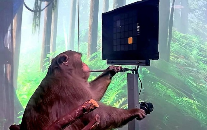 Elon Musk chipped a monkey and showed what opportunities it had