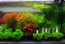 How to plant plants in an aquarium