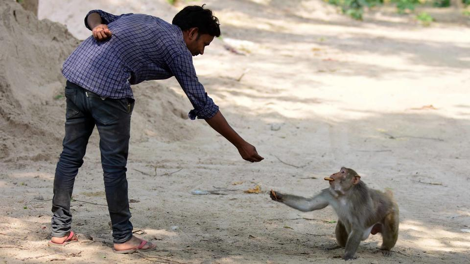 India arrested criminals who taught monkeys to steal money