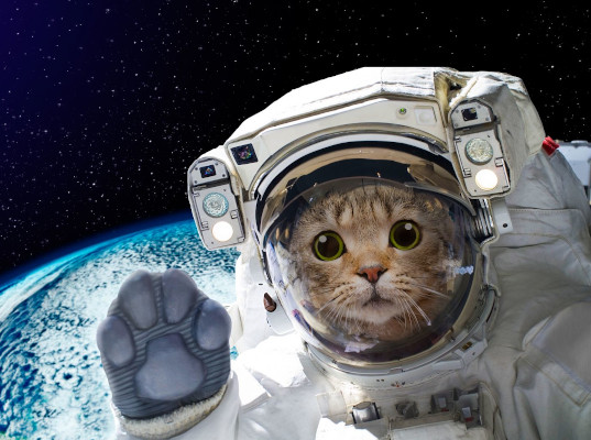 Russia will launch animals to the moon