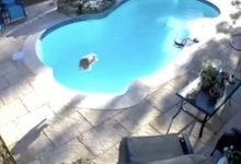 The rabbit saw the pool for the first time and jumped into it with a bomb