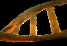 The worlds outstanding geneticist sells his DNA