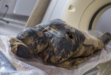 Worlds first Egyptian mummy of a pregnant woman found
