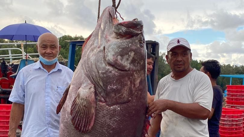 resident of Malaysia caught a perch weighing about 161 kilograms 1