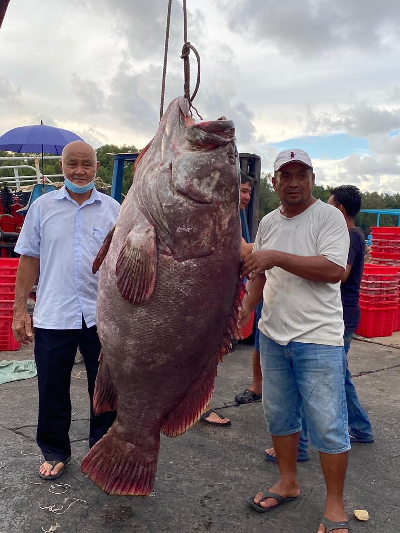 resident of Malaysia caught a perch weighing about 161 kilograms 2