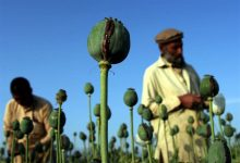 Afghan drugs 1