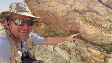 Archaeologists find prints on the seashore that are 58 million years old