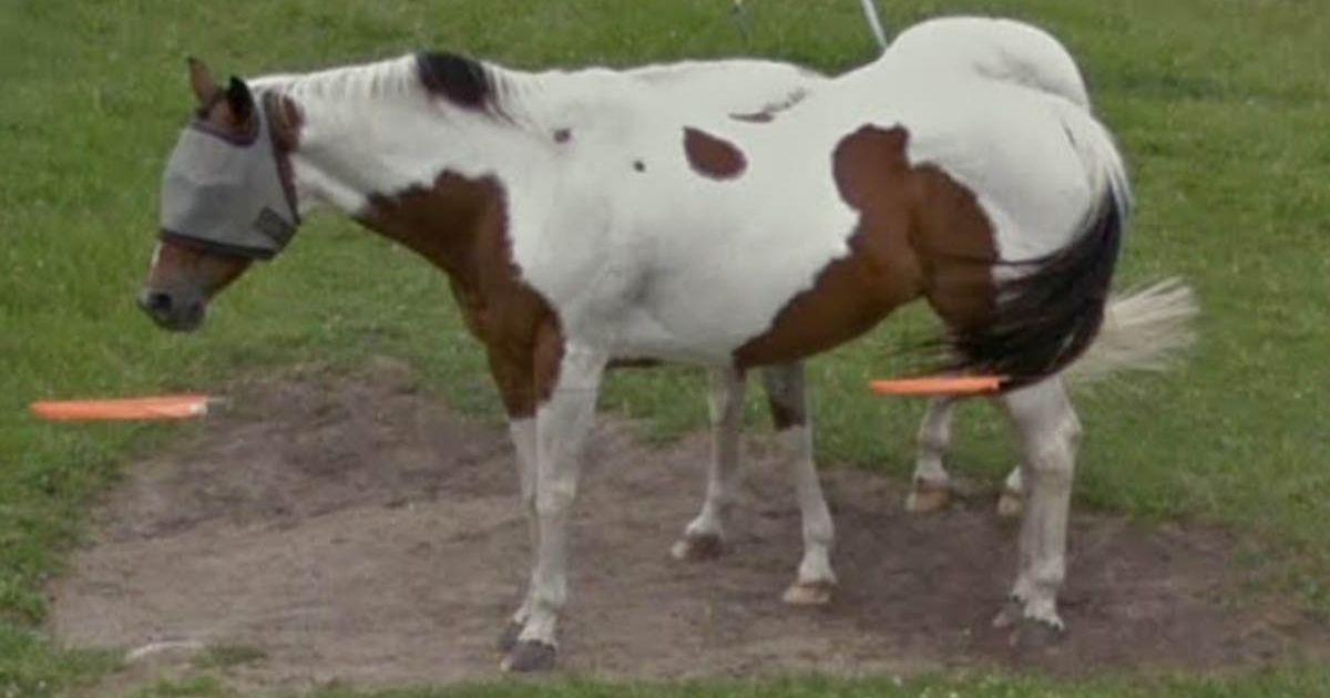 Blindfolded horse scared Google Maps user