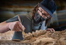 California park ranger accidentally finds a mastodon skull 2