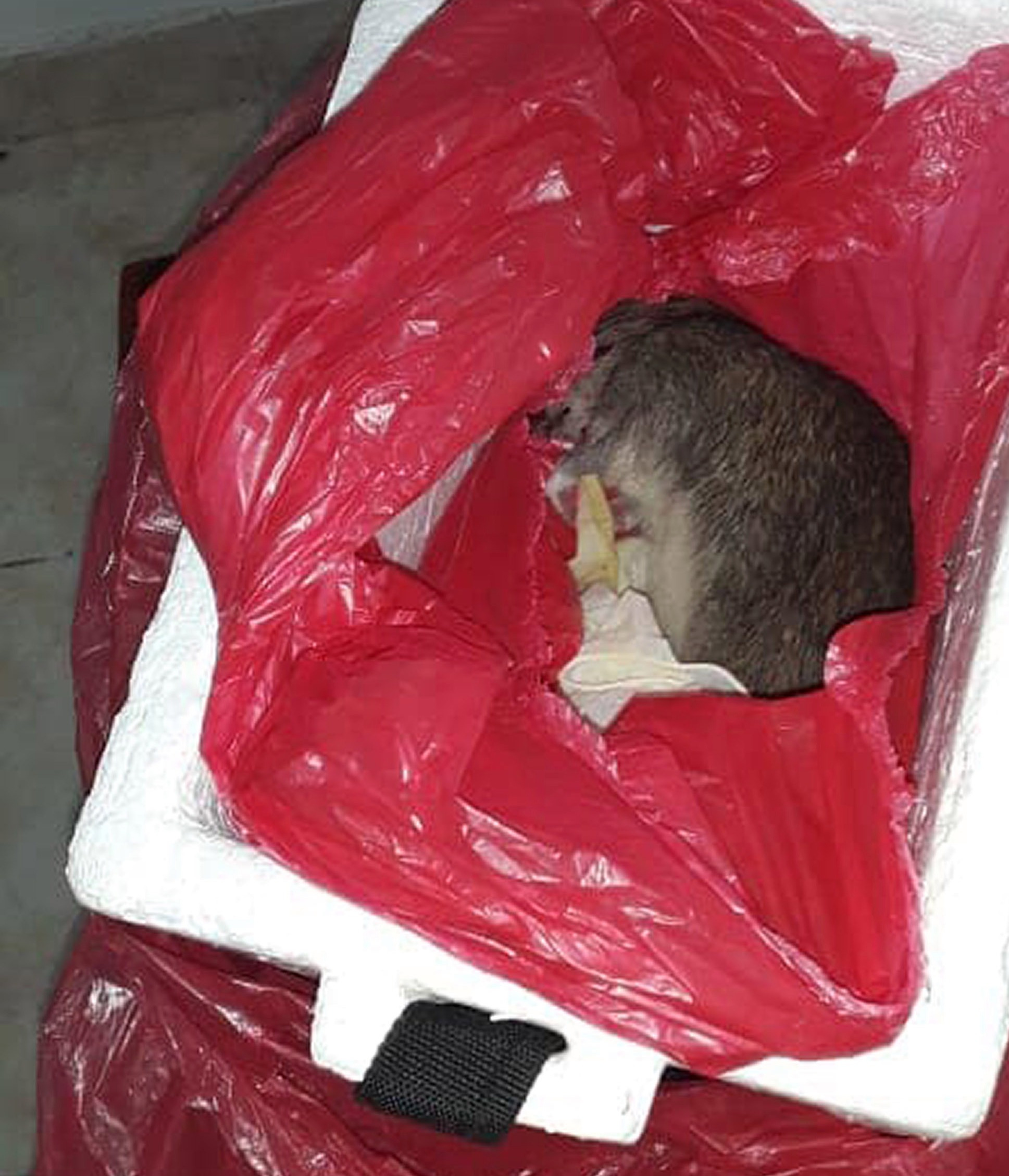 Colombian couple got a dead rat instead of a childs body 2