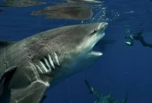 Diver collided head to head with a four meter shark