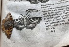 Dried 400 year old butterfly found in an ancient directory 1