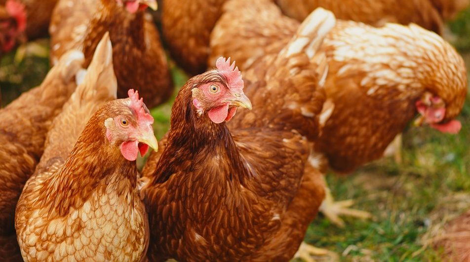 Highly pathogenic avian influenza outbreak recorded in 46 countries 1