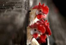 Highly pathogenic avian influenza outbreak recorded in 46 countries 2