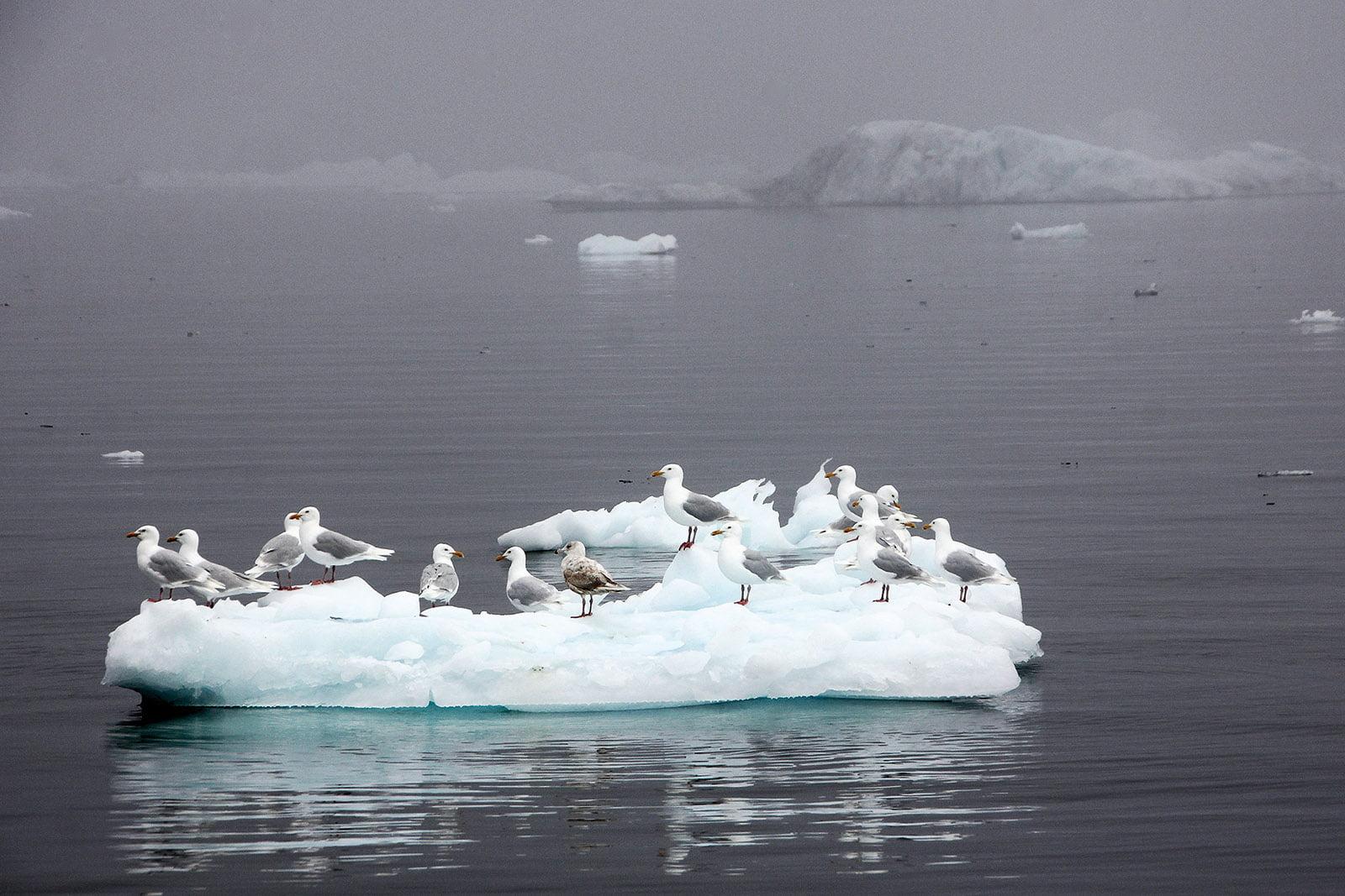 Melting glaciers in Greenland emit large amounts of mercury 1