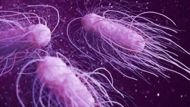 Outbreak of salmonellosis in the USA more than 150 people have already become infected 2