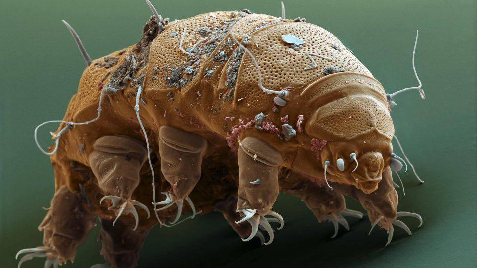 Tardigrades shot from a gun to test their survival 1