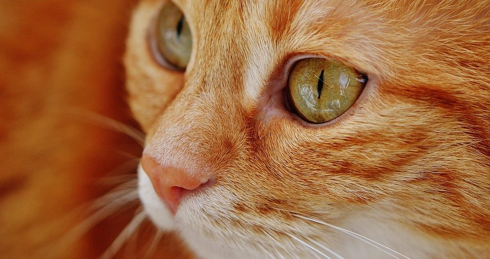 The cat saved the life of its owner after discovering her health problems