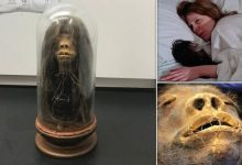 The dried head from the film Wise Blood turned out to be real