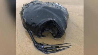 "A ""deep-sea monster"" washed up on the California coast"