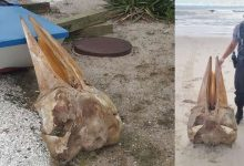 Half human skull washed ashore in New Jersey