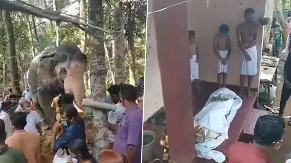 In India an elephant came to say goodbye to its deceased trainer