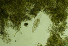 Organisms from the permafrost of Siberia revived after 24 thousand years