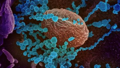 Will the secret of the coronavirus be revealed soon