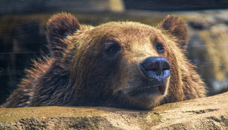 Alaska rescued a man who protected himself from a bear for a week