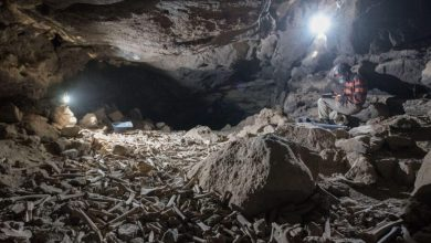 Archaeologists have found a cave where hyenas have dragged their prey for centuries
