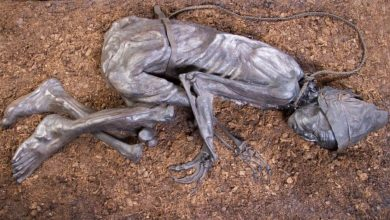 Scientists say what a man from Tollund ate before his death