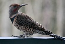 The mysterious mass death of birds does not stop in the USA