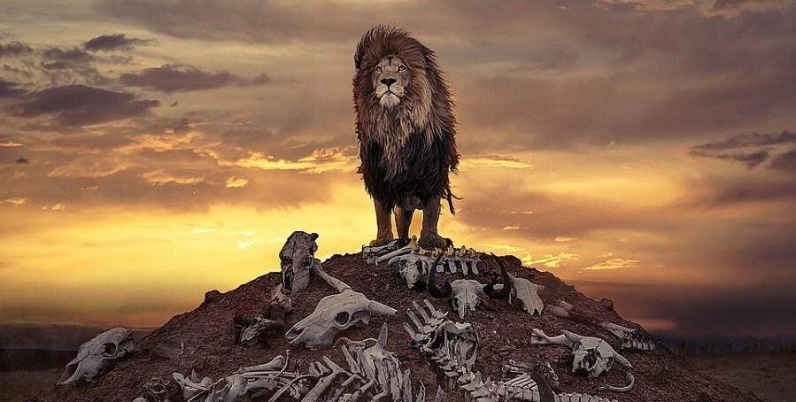 Unusual shot British photographer captures a lion over a pile of bones