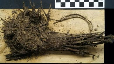 1800 year old bouquets of flowers found under the Mexican pyramid